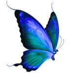 schmetterling blau transparent